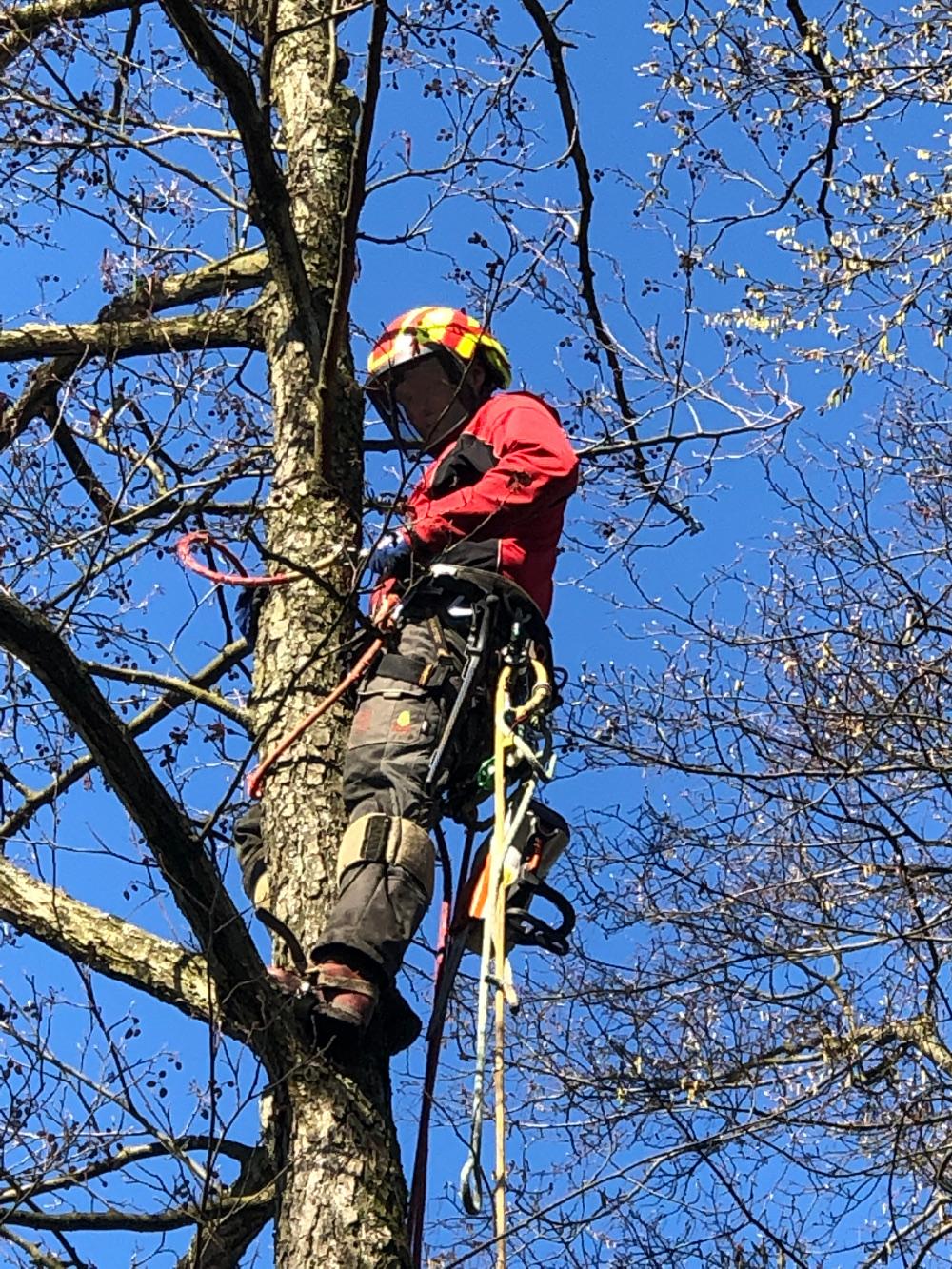 Baumkletterer Bergisches Land, Forstbetrieb