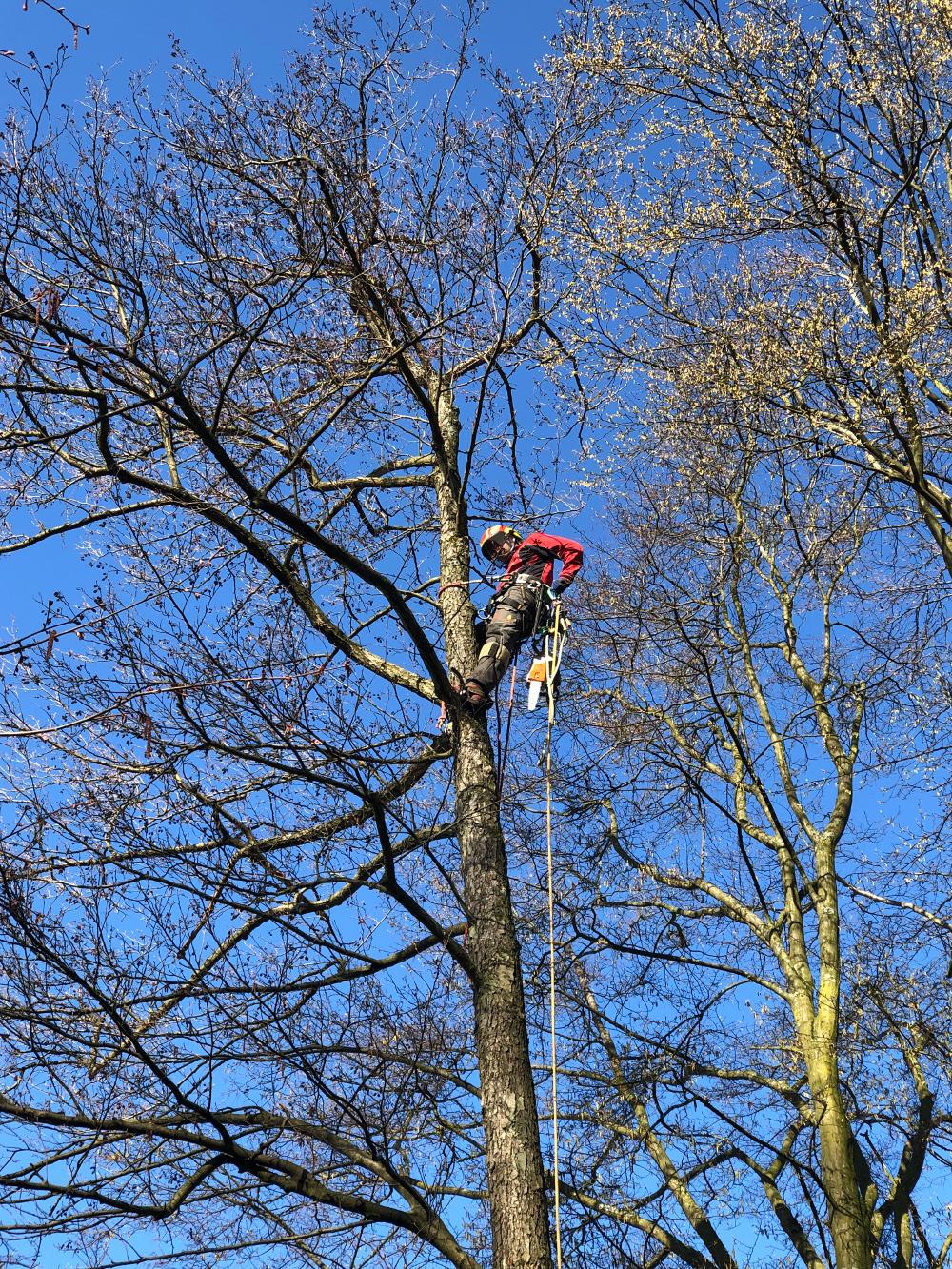 Baumpflege Köln